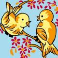 Oiseaux - 47