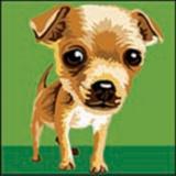 Kit canevas enfant 20/20 petit chihuahua - 150