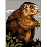 Canevas 40/50 pénélope antique marmotte - 150