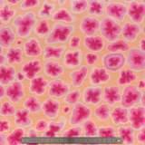 Tissu petra peach - 22