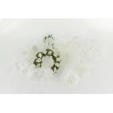 Assortiment de 10 modèles fleurs nuance blanche - 265