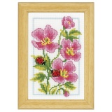 Miniature géranium rose aida - 4