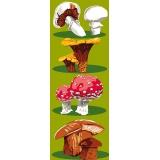 Les champignons - 47