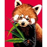 Panda roux - 47