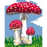Champignons - 47