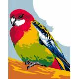 Oiseau - 47