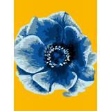 Fleur bleu - 47