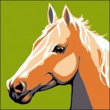 Kit canevas soudan 20/20cm cheval - 47