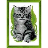 Kit pt compte aida chaton - 47