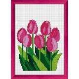 Tulipes - 47