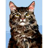 Main coon - 55