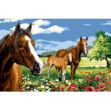 Les chevaux de la prairie - 55