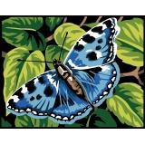 Papillon - 55