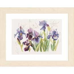 Kit pt compté iris bleues / fond imprimé - 4