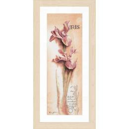 Kit pt compté iris - botanique / fond imprimé - 4