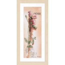 Kit pt compté rosa - botanique / fond imprimé - 4