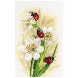Kit point compté ladybug parade - 4