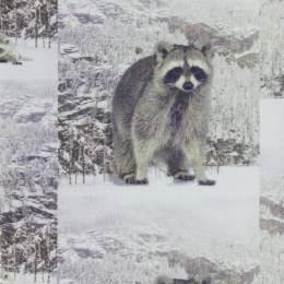 Tissu Stenzo jersey dp raccoon 150cm - 474