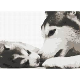 husky et son chiot - 55