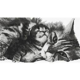 chatte et son chaton - 55