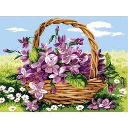 Les violettes - 55