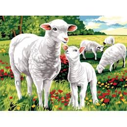 Moutons au champ - 55