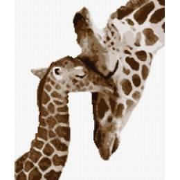 Girafe et son girafon - 55