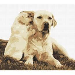 Labrador et son chiot - 55