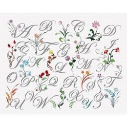 Abécédaire fleurs sauvages 50/60 - 64