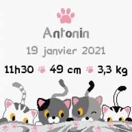 tableau de naissance petits chats - 64
